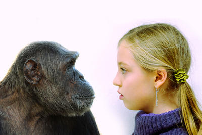 Wie Menschen Affen sehen
